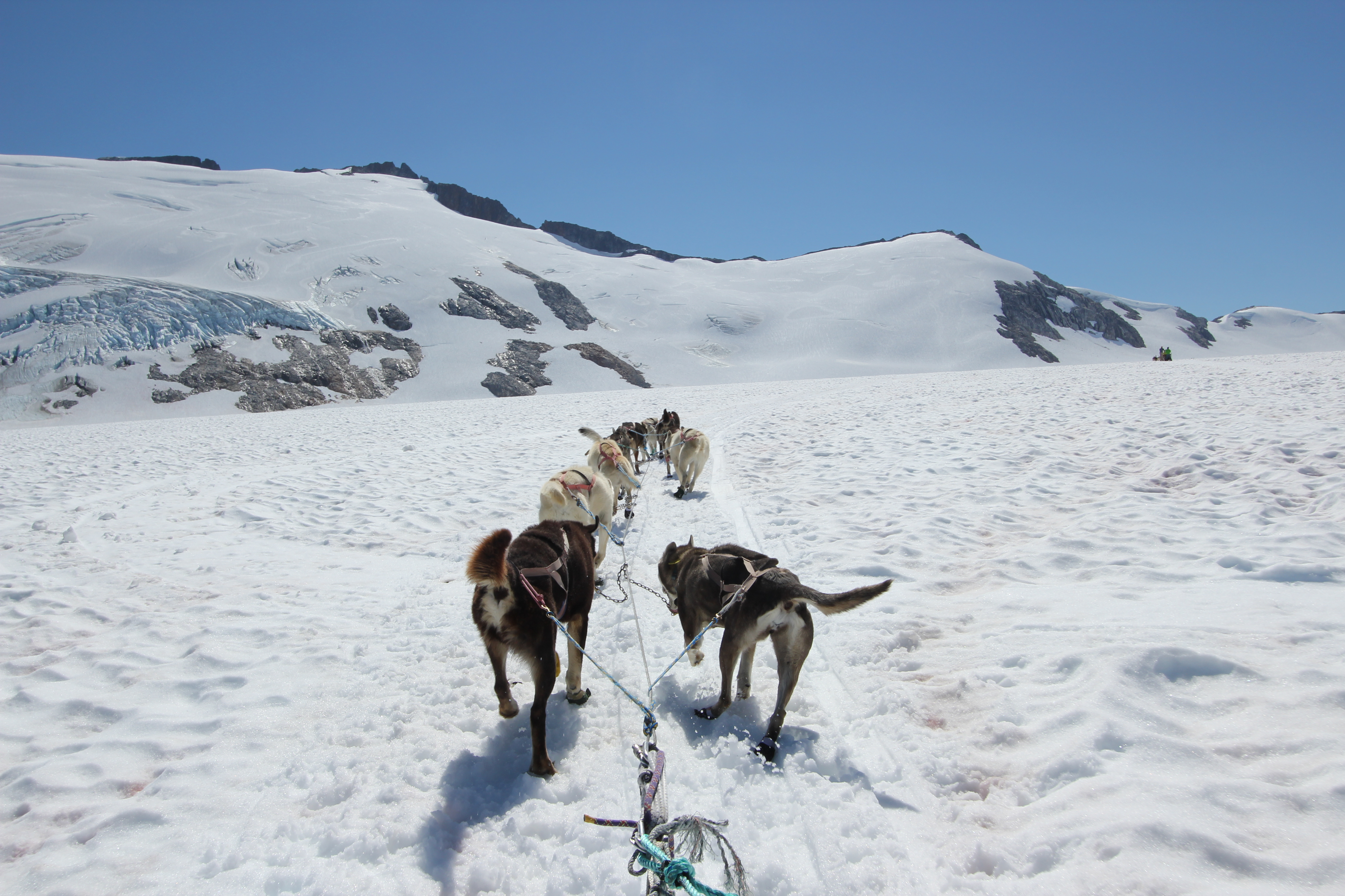 Heading out by dog sled on the Juneau Icefield, Norris Glacier Middle Branch