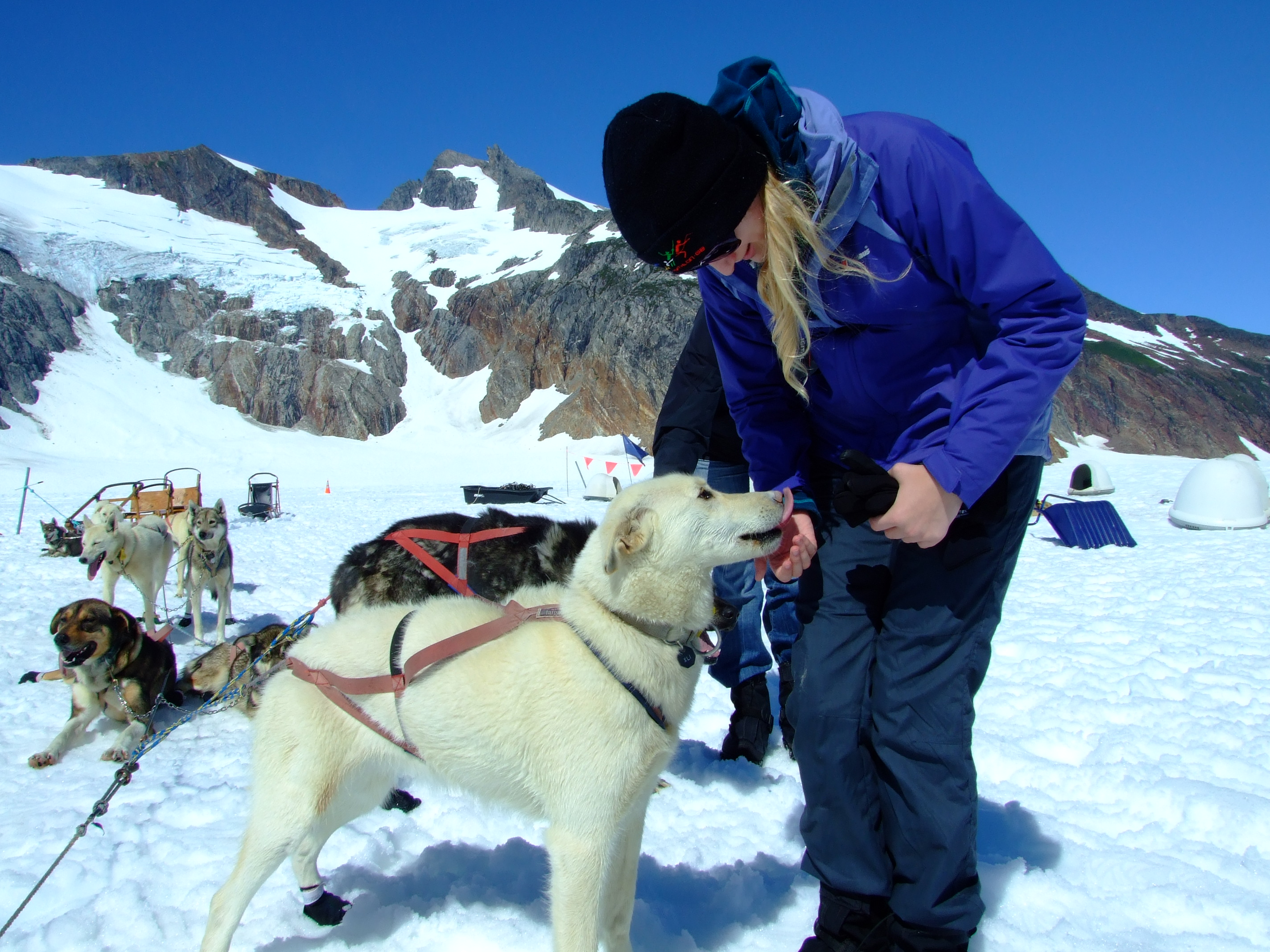 Making new friends on the Juneau Glacier Dog Sled Adventure with Era Helicopters