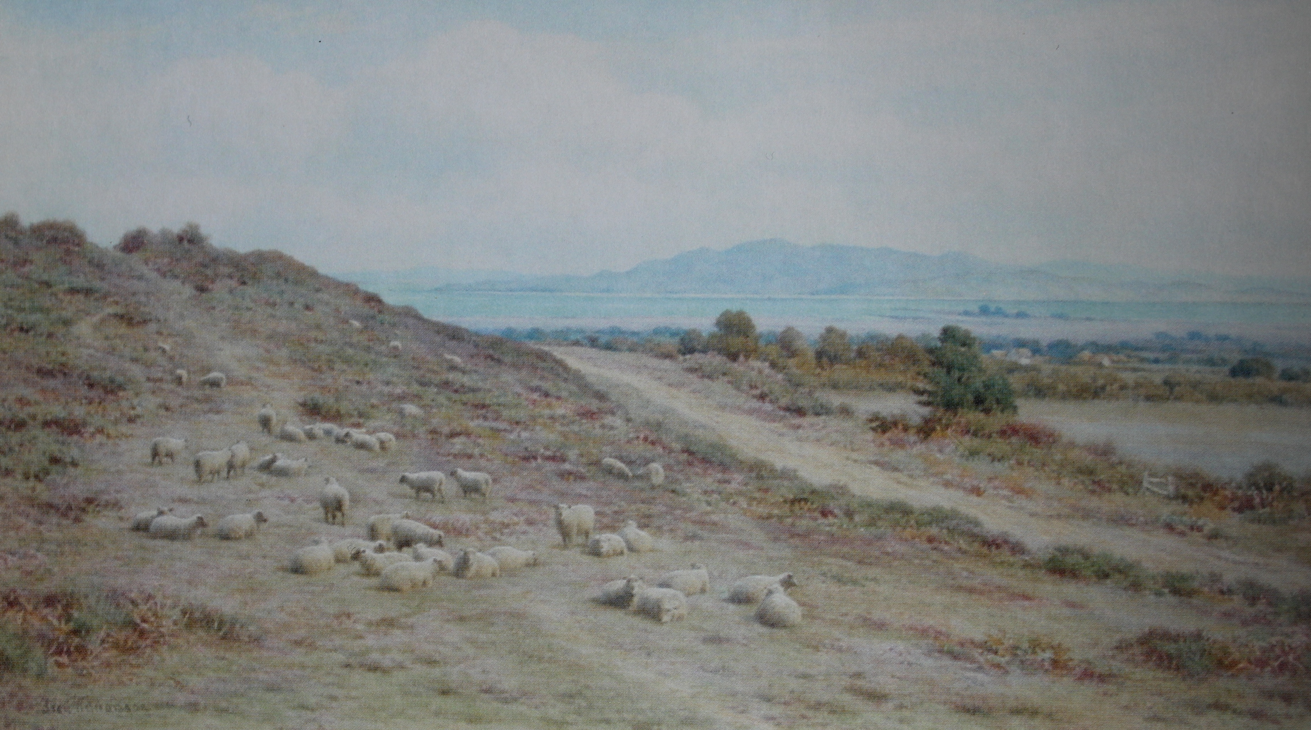"From a postcard of the watercolour painting ""Arne Hill Wareham, Looking To Poole Harbour"" by Frederick Williamson (1835-1900). He specialised in landscapes with sheep in them, and the connection here is that 'Shipstal' has nothing to do with anything nautical, but instead is derived from 'sheep stall'."