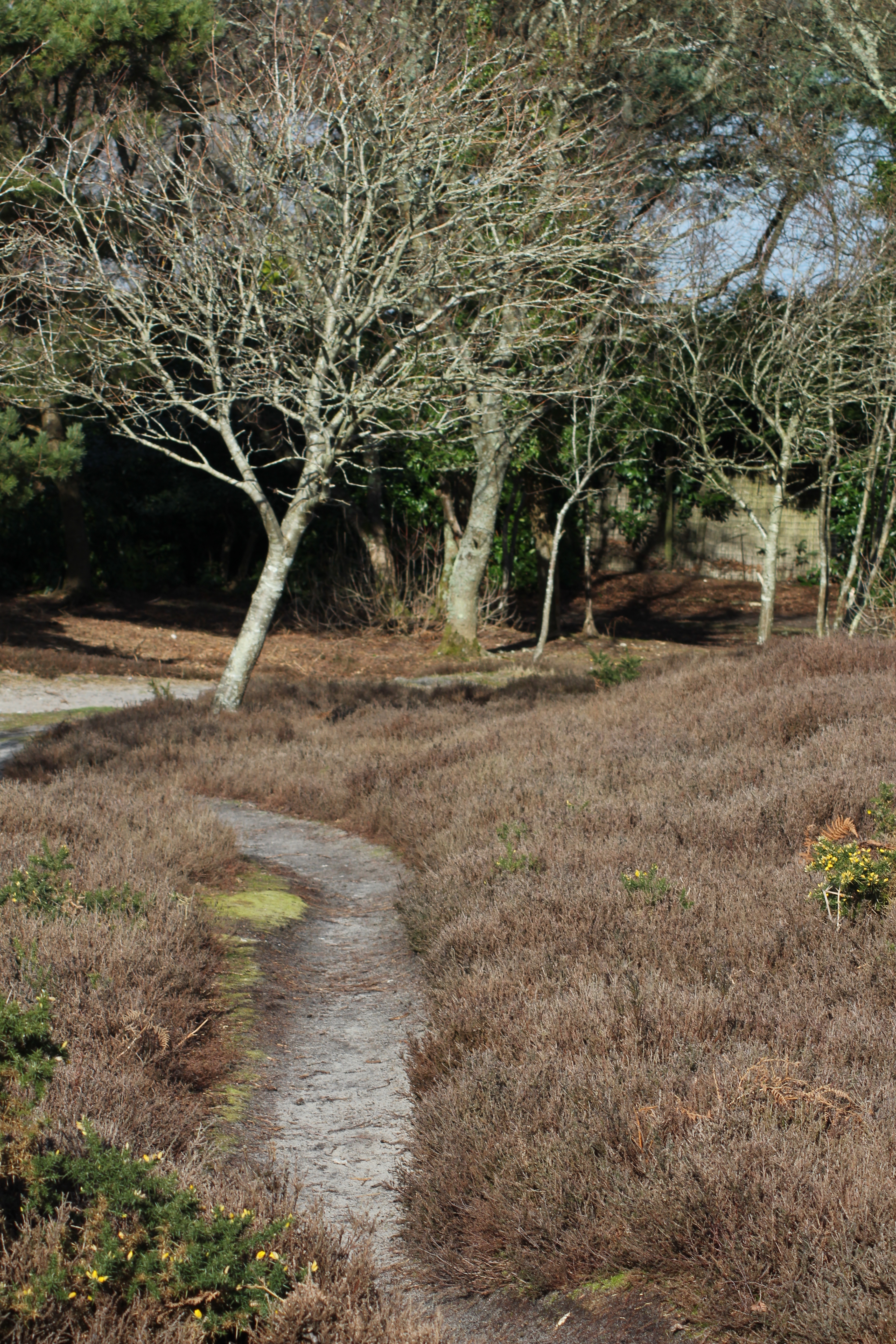 Having descending from Shipstal Hill there is a wider track which parallels the official footpath down to the shore…