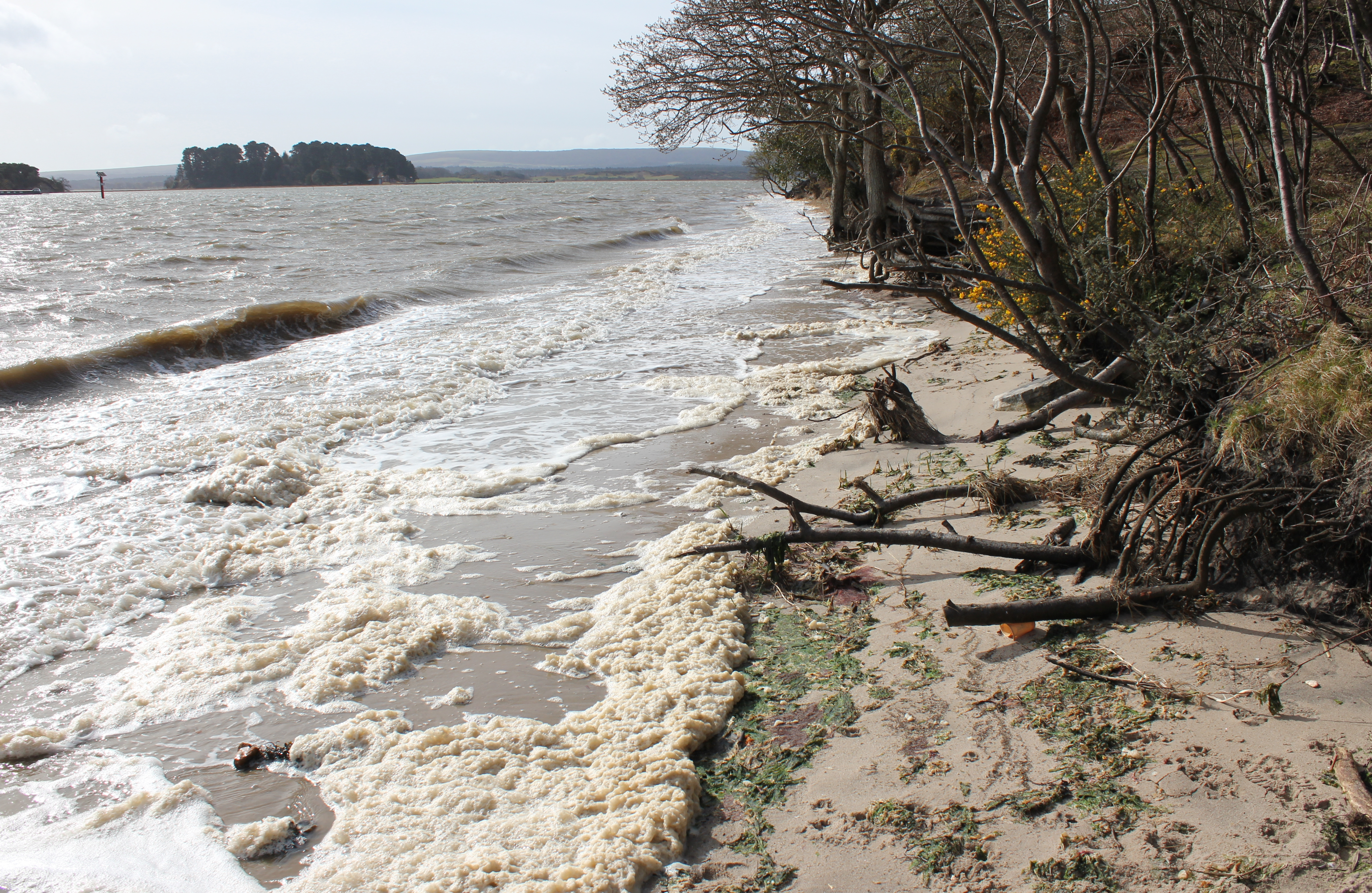 Poole Harbour's unusual tides are explained here. This is almost as high as it will get on a spring tide, with the wind as the cause of the waves. Tide prediction heights and times for Poole Harbour are available here.
