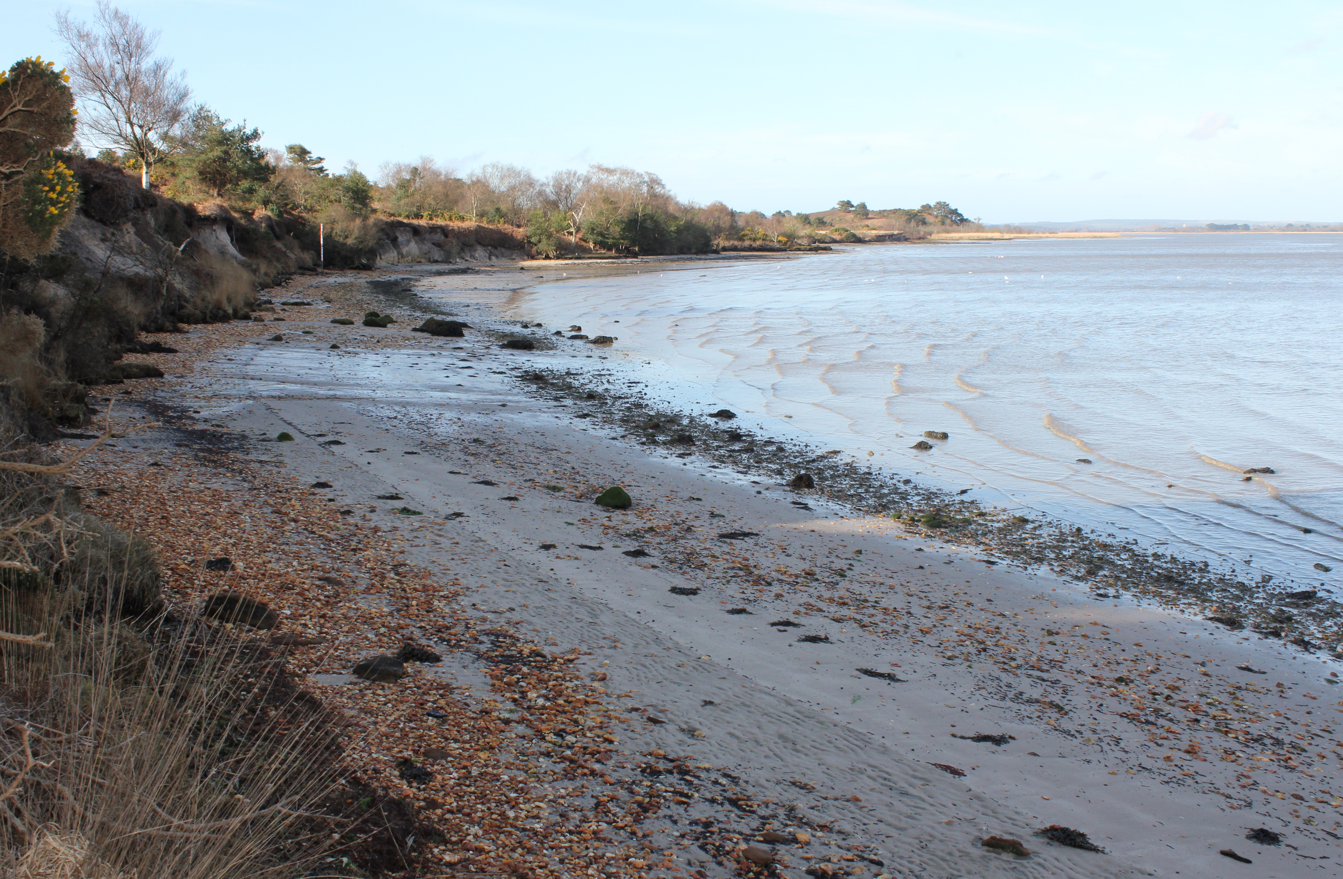 The view to the south-west from just south of Russel Quay (early April 2016). As it was before 09:00 when this picture was taken the sunshine on top of the Arne peninsula had yet to reach over the low cliffs, but, as can be seen from the incoming tide, it was a lot calmer than over at Shipstal Point which had all but disappeared under the waves driven by the easterly wind (see earlier images).